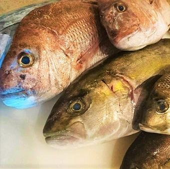糸魚川漁港や大船漁港をはじめ、漁師から届く毎日新鮮の魚たち。