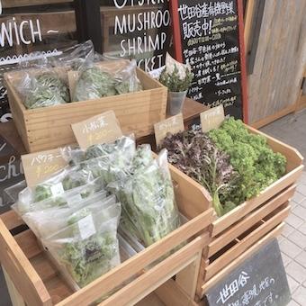 店頭では珍しい野菜も販売しています!