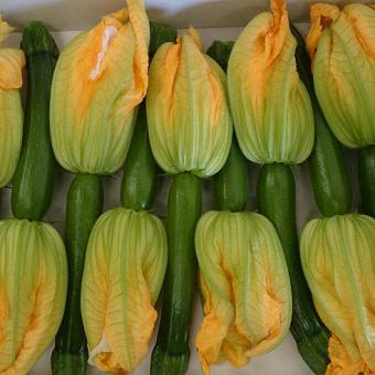 宮崎県より新鮮なお野菜が直送で届きます!