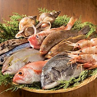 日々10種類以上の天然魚
